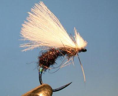 DSCN8682 Terrestrial Flies   Part 2