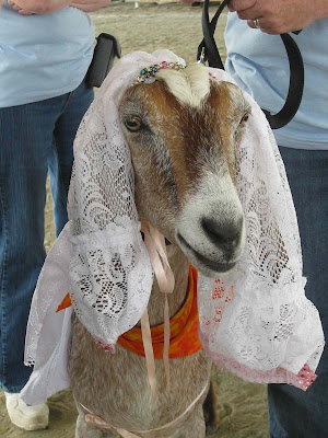 Brazilian Man To Marry His Goat