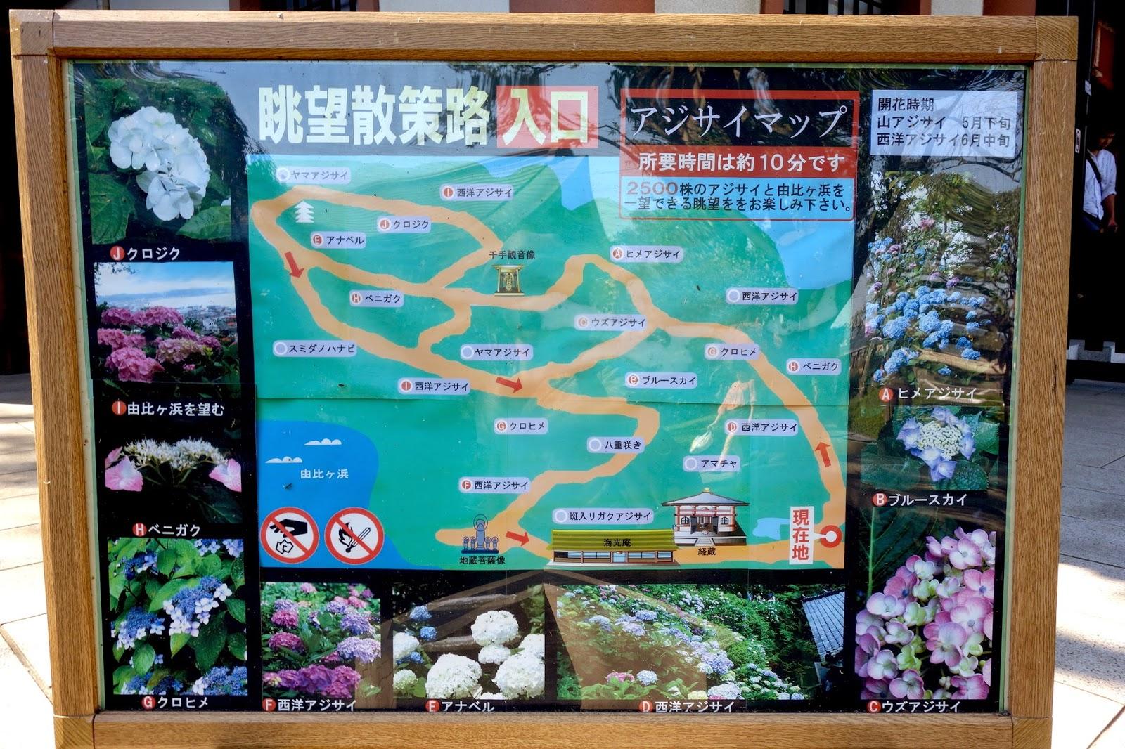 Hasedera 長谷寺 temple Hase Temple kamakura japan tour tripajisai hydrangea