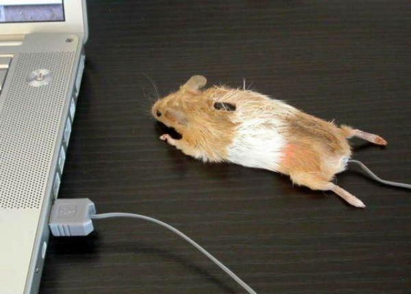 Как сделать мышь компьютерную