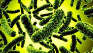 Условно-патогенные бактерии