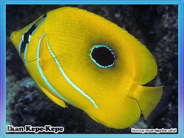 Ikan Kepe-Kepe