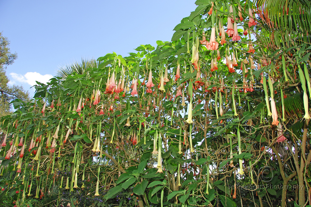 alam mengembang jadi guru 10 tanaman yang paling mematikan
