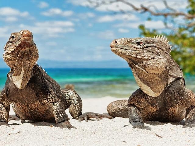 """<img src=""""http://4.bp.blogspot.com/-r0GQbiXaNcg/UrAUtU9AgRI/AAAAAAAAFz0/iNAvyZhqr34/s1600/64r.jpeg"""" alt=""""Reptiles Animal wallpapers"""" />"""
