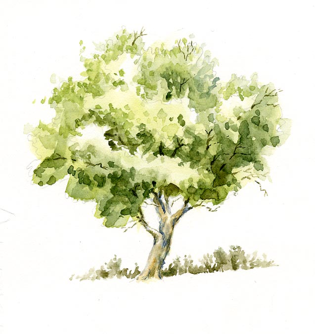 Gallery For gt Simple Watercolor Tree