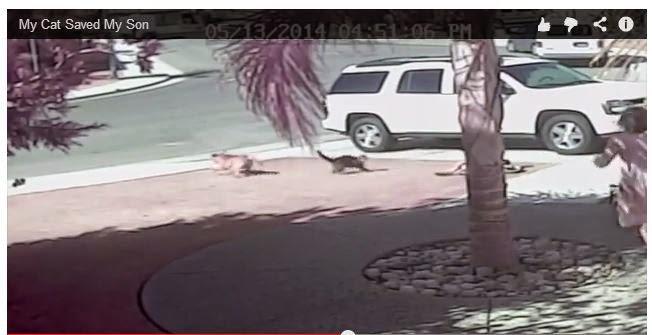 El gato que salvó a un niño del ataque de un perro
