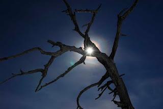 drevo. in spomin. │ ker je tvoja bolečina (p)ostala moja. │ ker ljubezen je.