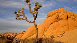 boulders, desert