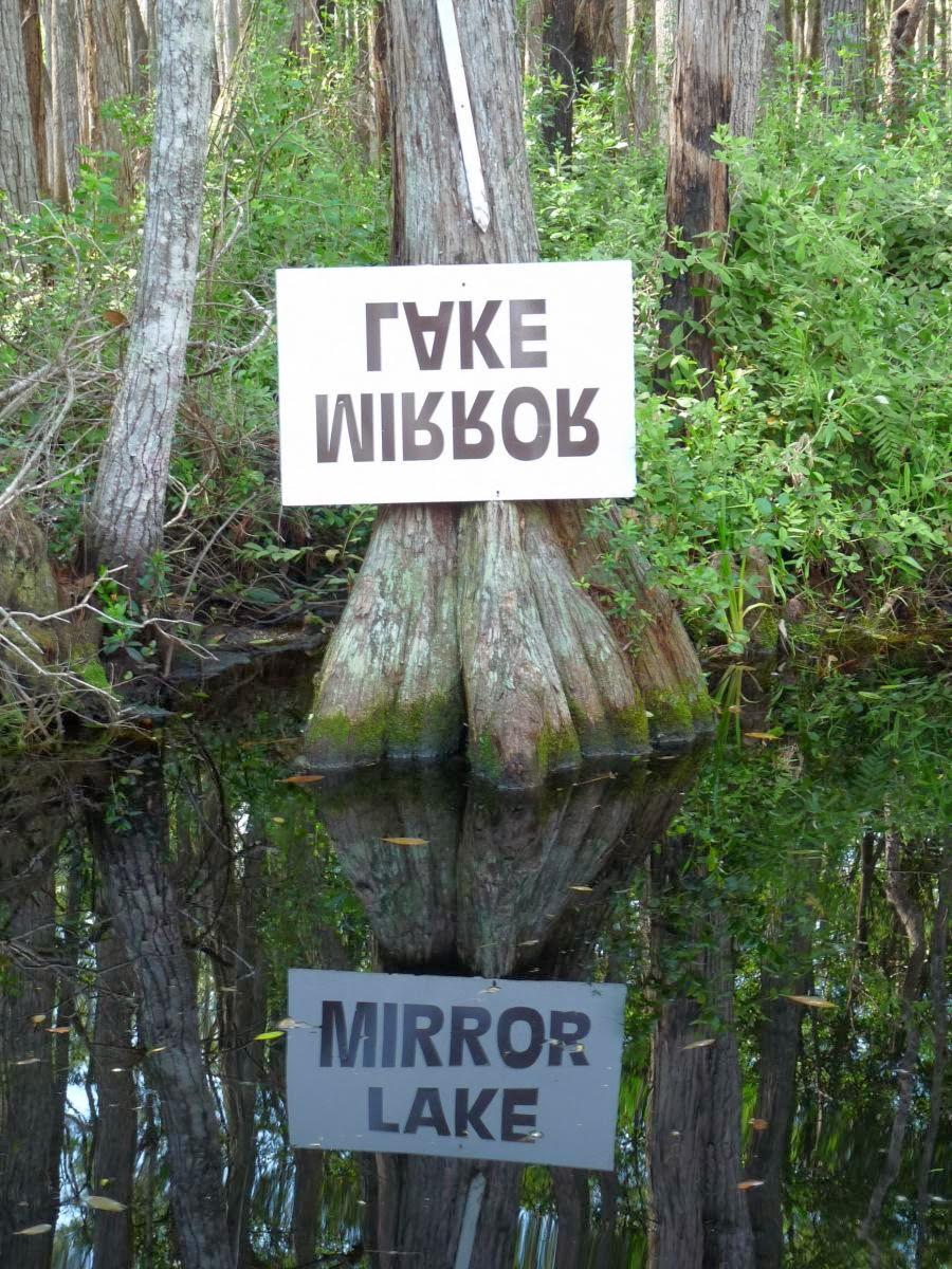 the okefenokee swamp If you want kayaking in florida, join the bullington family on one of our  okefenokee swamp tours this day trip offers a wilderness experience.