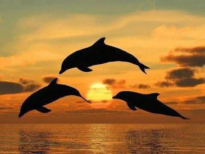 http://4.bp.blogspot.com/-r0yUc8e0b-I/UQcfbG79xFI/AAAAAAAAX4U/IAbQse8wDZc/s400/130128_siluetas-de-delfines-saltando-fuera-del-agua-al-atardecer_anemon.jpg