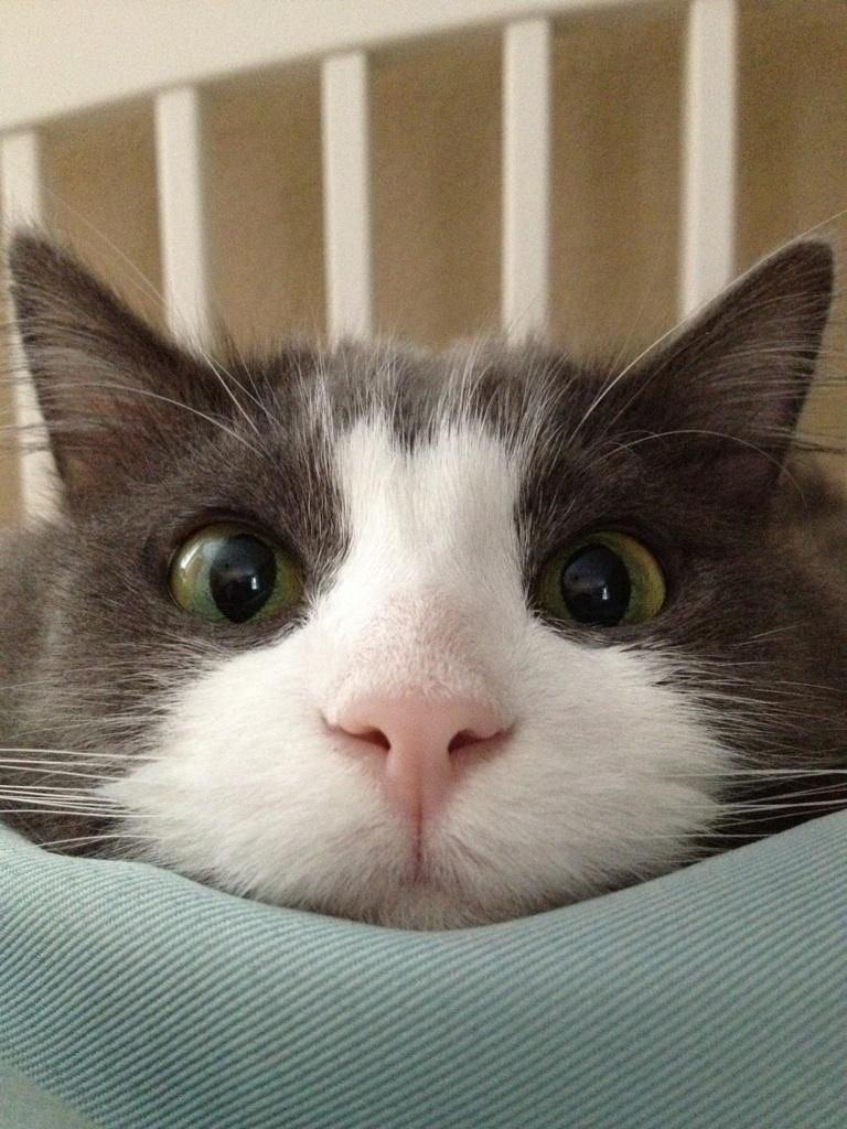 Кот с круглыми глазами