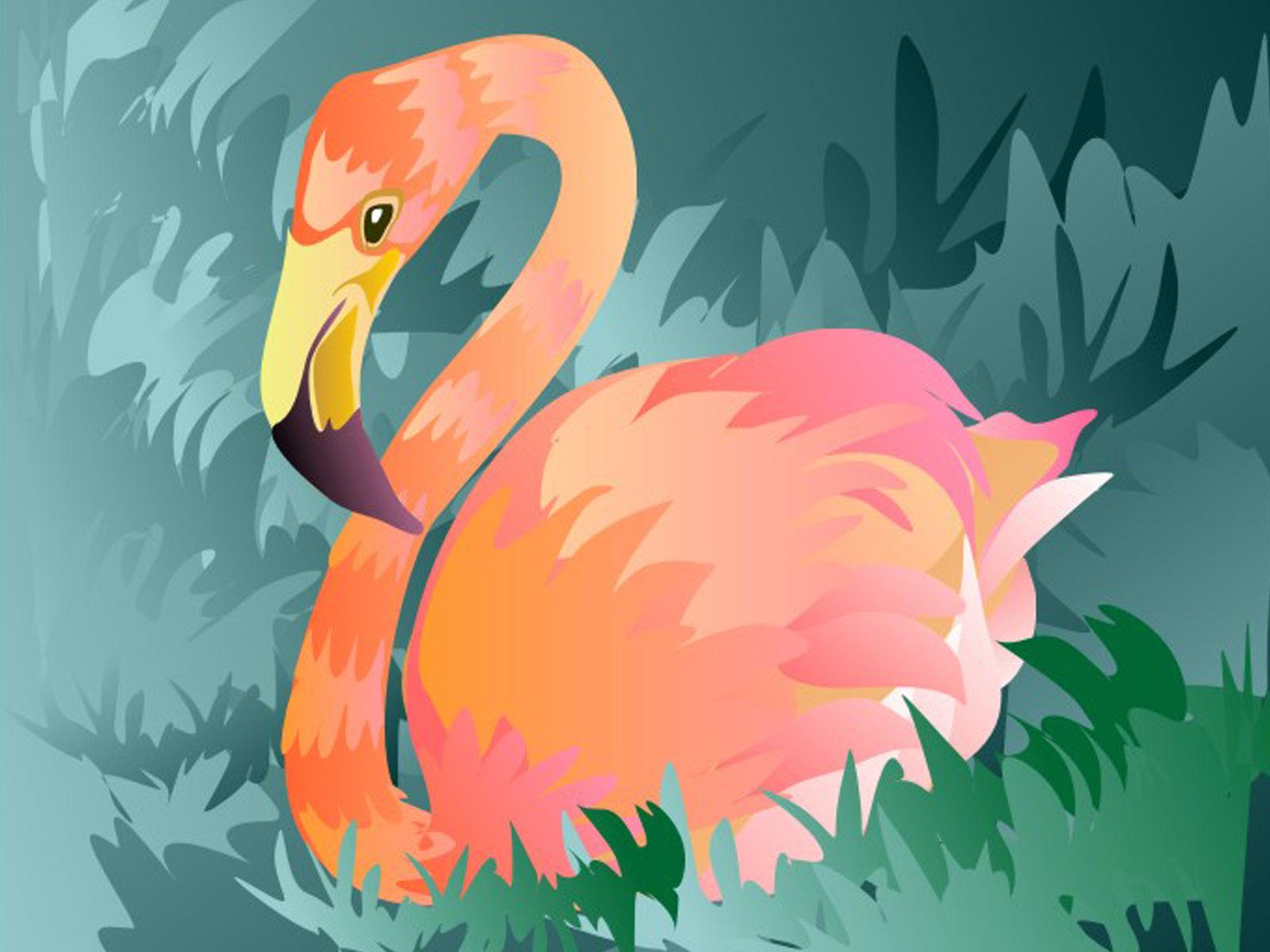 Flamingo Nature Adventure