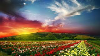 Keindahan Warna Warni Bunga dan Alam Semulajadi
