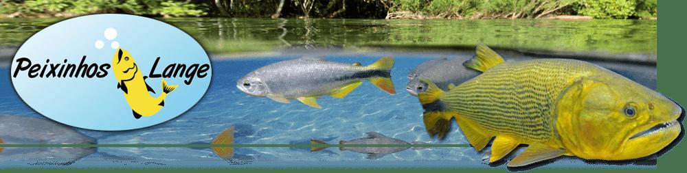 Peixinhos Lange - Timbó / Santa Catarina
