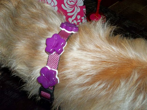 Resin Dog Collar- Tanya Ruffin