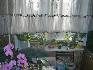 Фото квартира солнечная сторона светлая и теплая