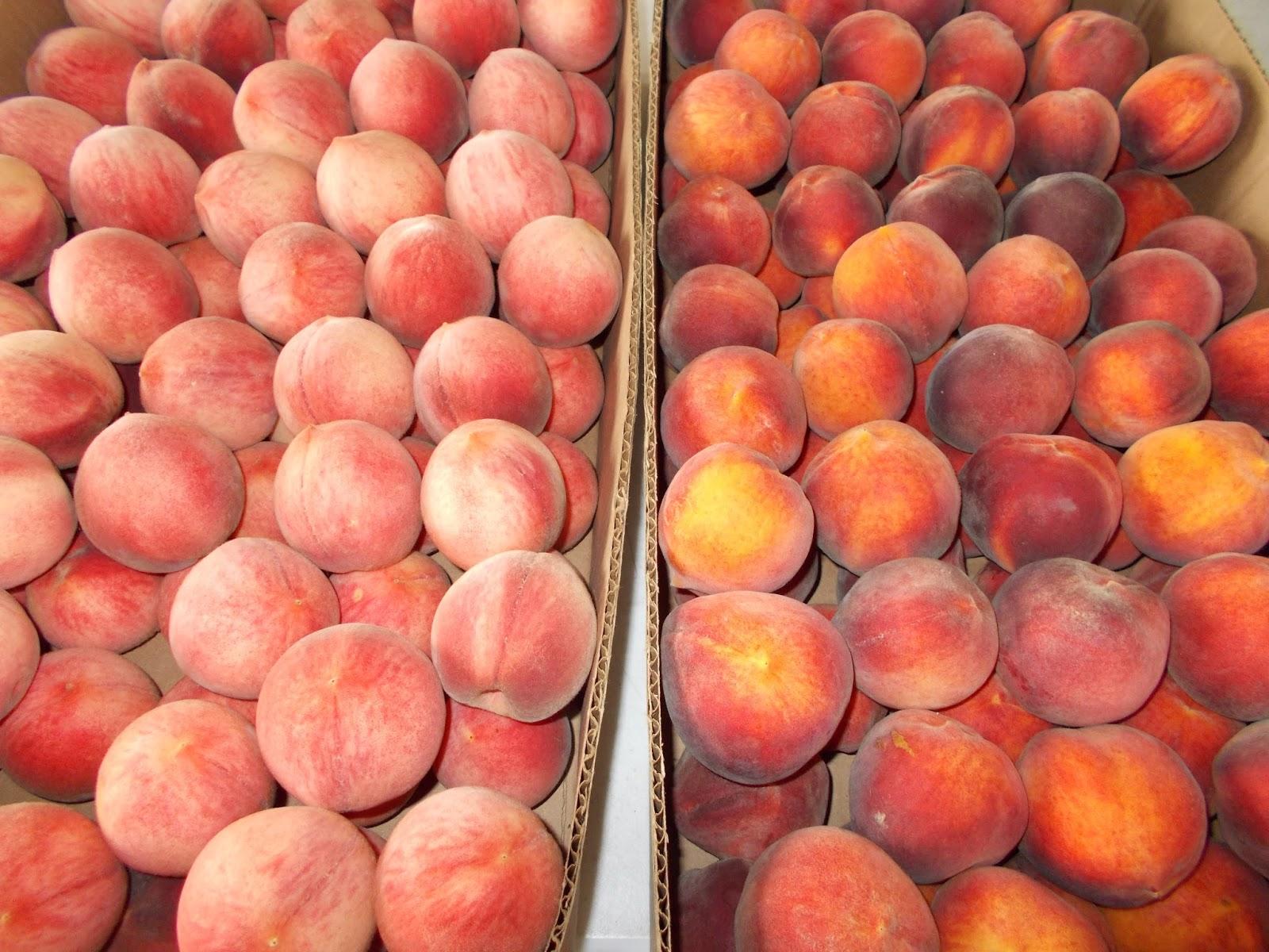 Как сделать персики спелыми 692