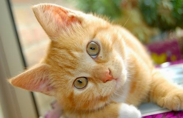Pide consejo a Refranes de gatos