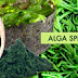Spirulina alga – a vitálanyagbomba