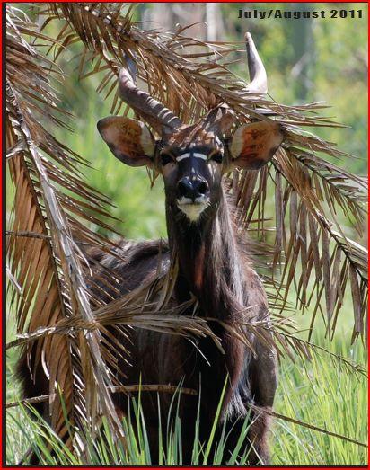 Ungulate Zoo Zoo News Digest...