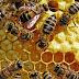 1.321.500 € για τη λειτουργία Κέντρων Μελισσοκομίας