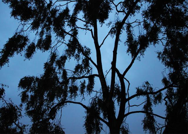 12 von 12, Neunzehngrad, Bild eins, Baum