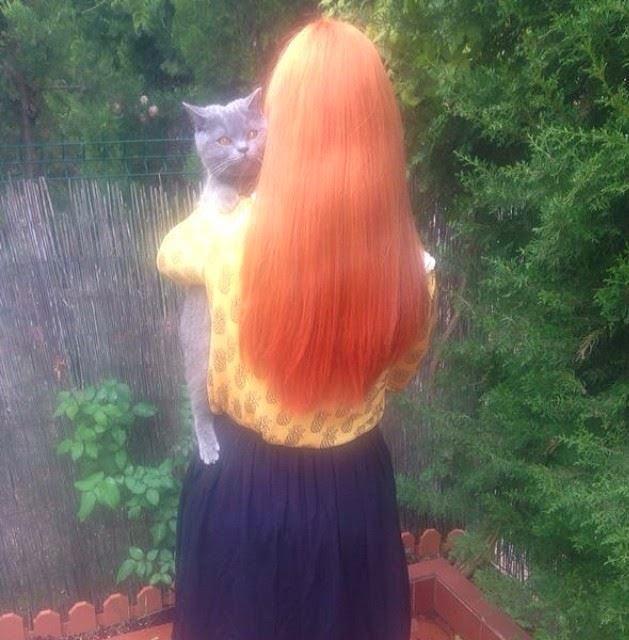 pelirroja red hair orage hair hair style pineapple gatito kitten