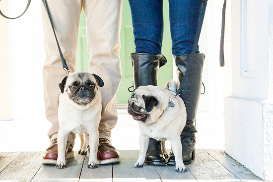 Here&Now: How to pose with your dogs for photos