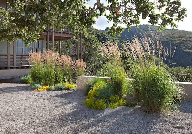 Garden Bloggers Fling Bernard Trainor Garden Preview: The Style Saloniste: Fields Of Vision: Nature Glorified