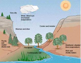 Contoh Gejala Alam Biotik dan Abiotik