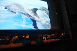 Concert aquatique avec MEMB et la troupe de Claire Lefur