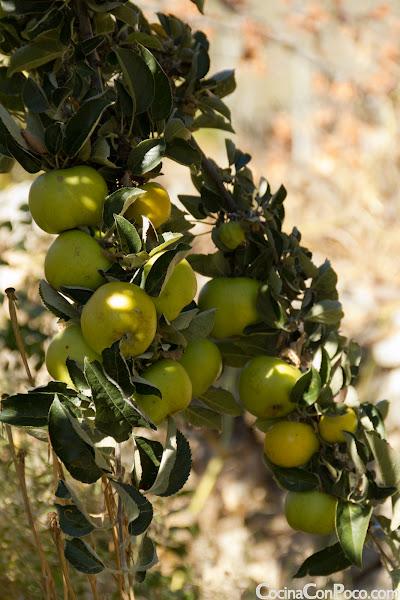 Compota de Manzana - Receta paso a paso