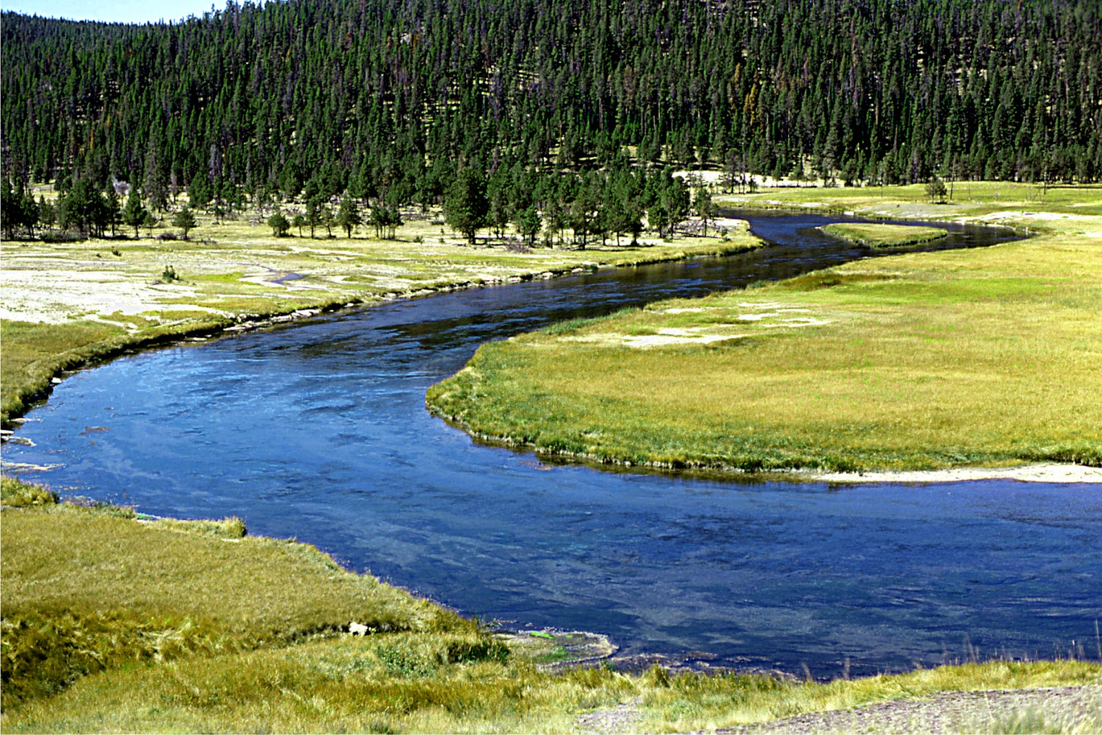 Fly fishing in yellowstone national park for Fishing in yellowstone