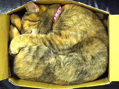 Foto kucing sedang tidur10