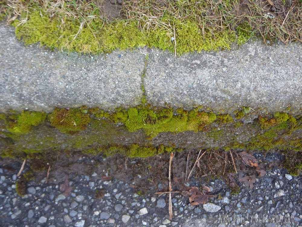 Moss covered curb
