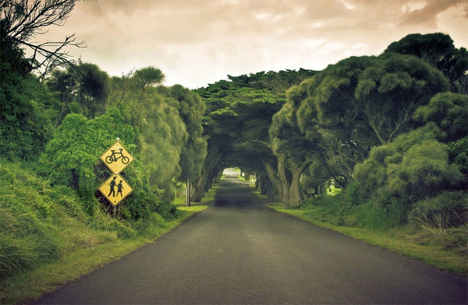 Beautiful Tree Tunnels 12 Pic Awesome Pictures