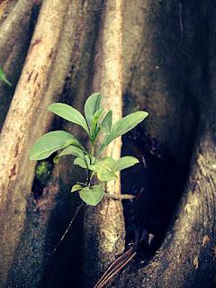 Tunas Pohon