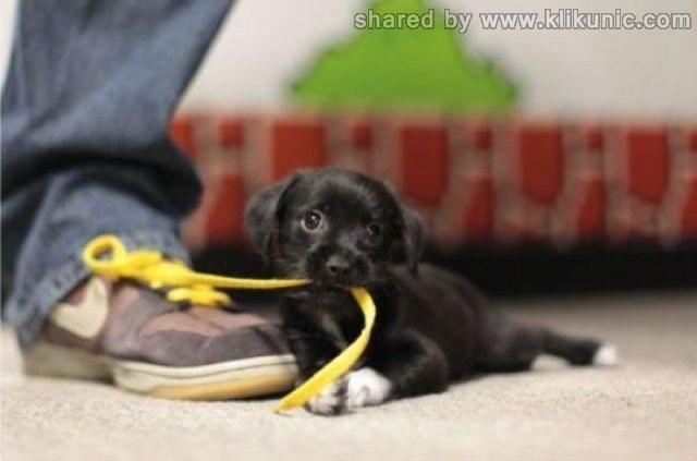 http://4.bp.blogspot.com/-r6CTZ8xKttI/TXlnH-mNazI/AAAAAAAAQyg/vLge0MfTZUA/s1600/these_funny_animals_635_640_02.jpg