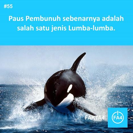 Orca adalah Keluarga Lumba-lumba