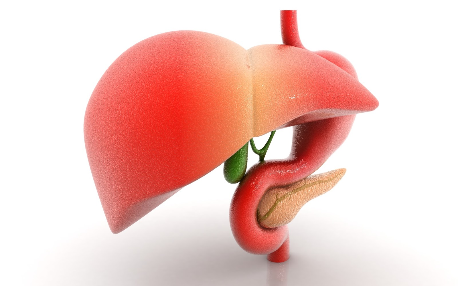 HCV New Drugs: Dietary Fructose Causes Liver Damage in ...