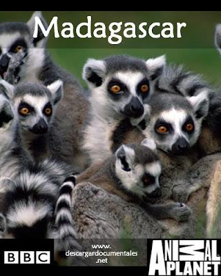 Documentales MADAGASCAR [1 link] [Español] [BBC]