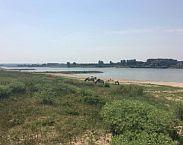 Foto voorkant Grote grazers voor veiligheid en natuur in rivieruiterwaarden, W.M. Liefveld