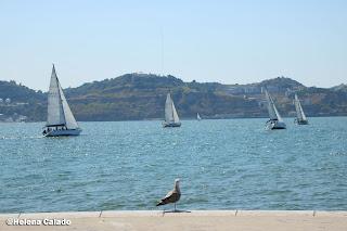 Fotografia de uma gaivota observando veleiros em Belém