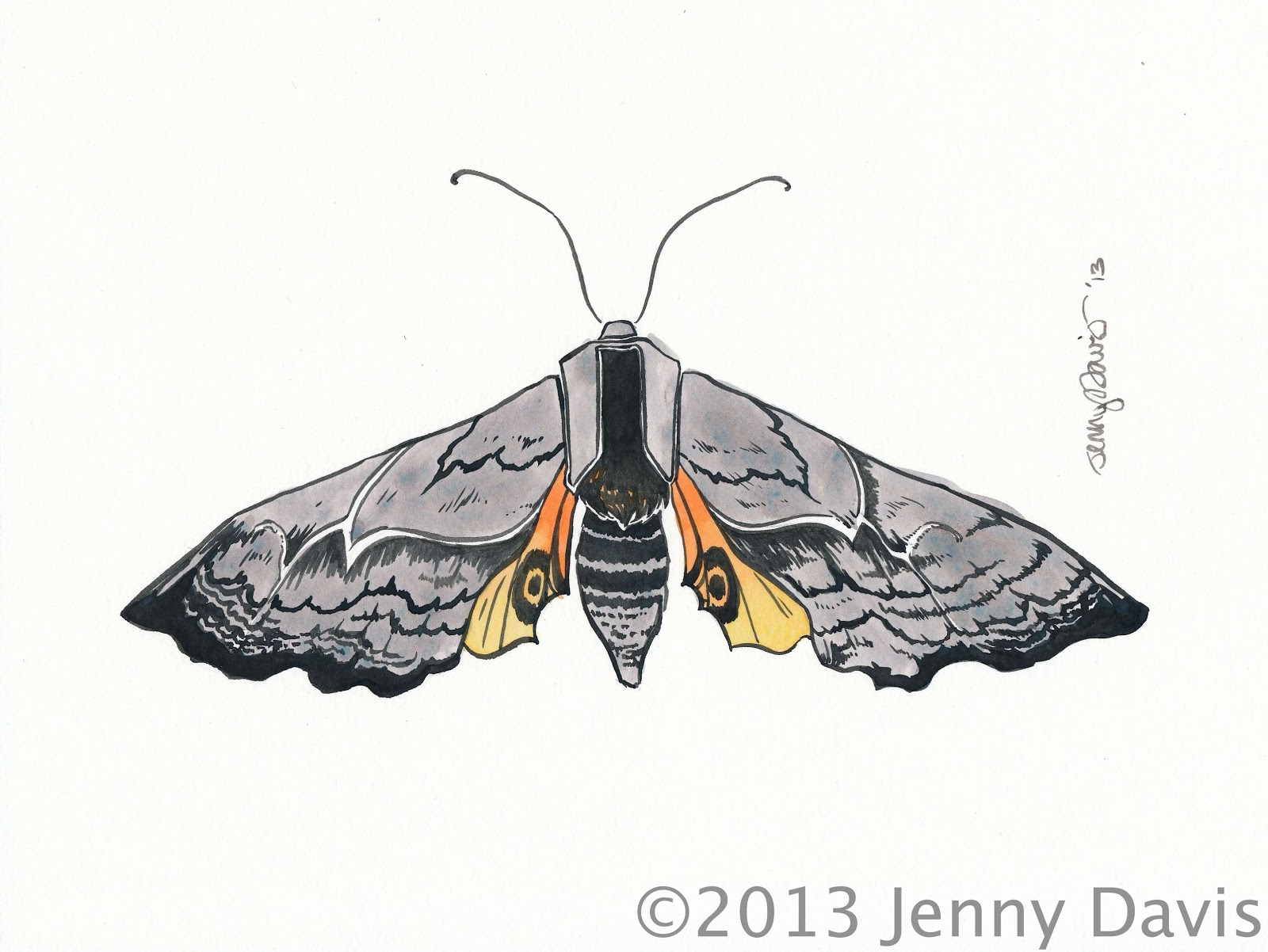 Moth drawing - photo#14