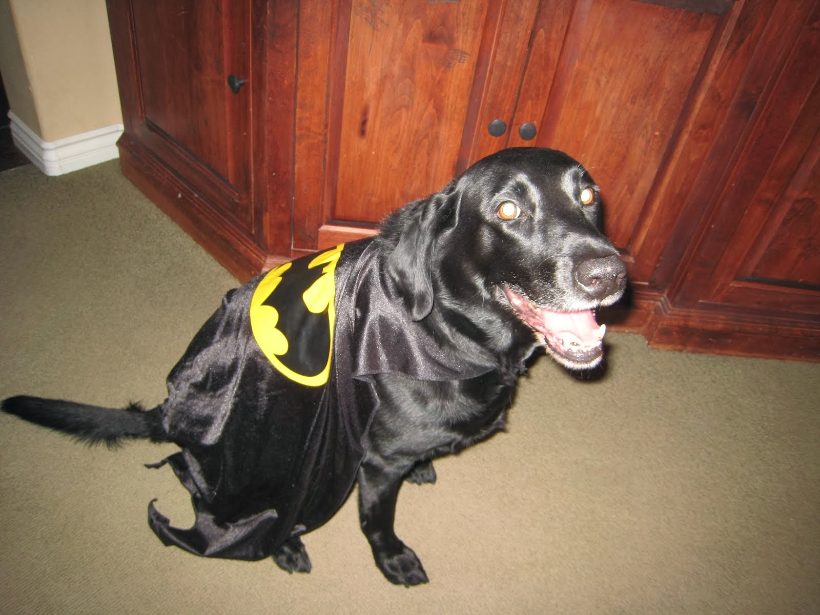 Is That Batdog?
