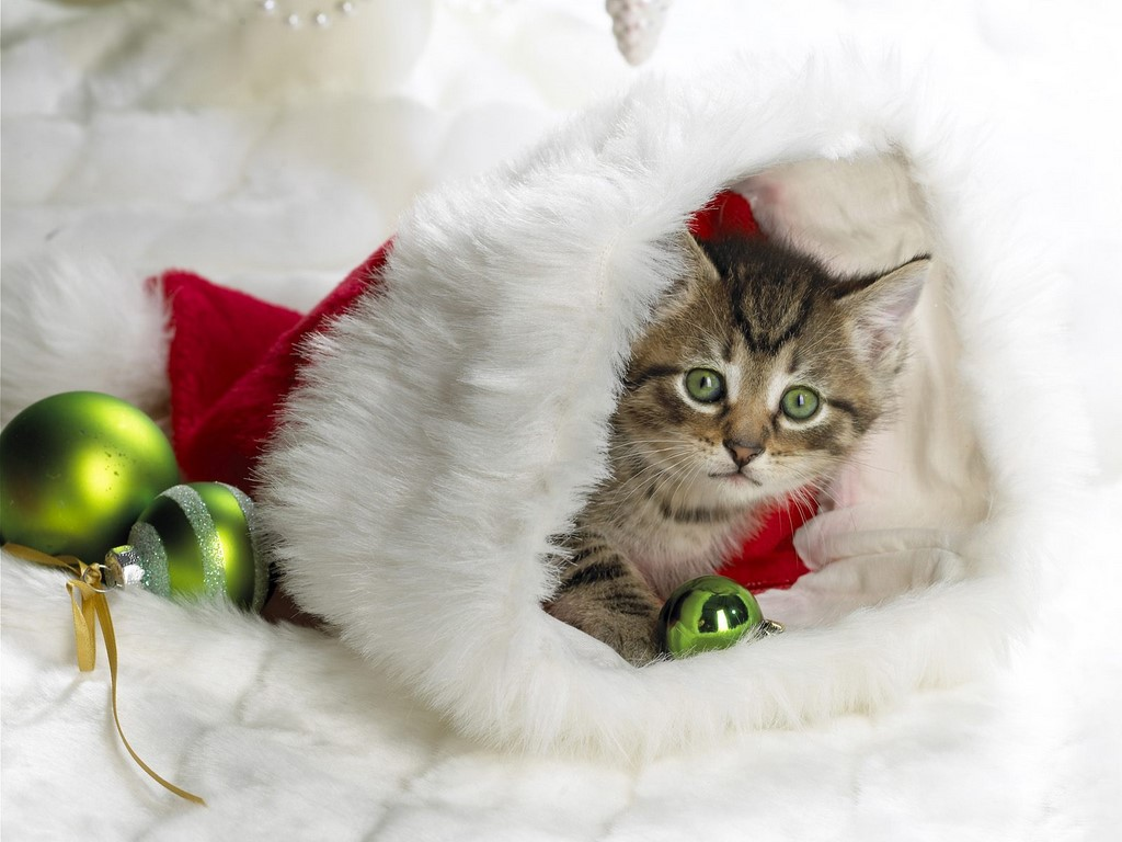 free christmas wallpapers christmas kitten wallpapers