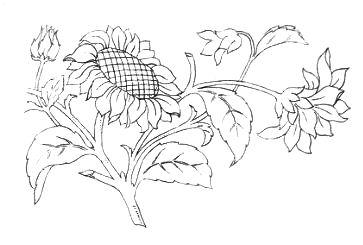 simple flower drawings clip art