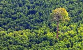 Sumber Daya Alam di Bidang Kehutanan
