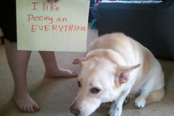 Adestramento de Cães, Publicitario13.com.br