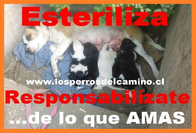 """""""Los Perros del Camino..."""""""